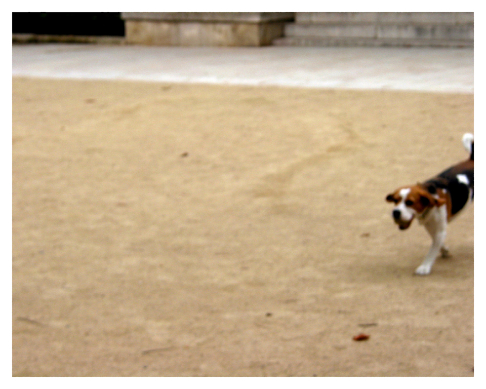 01.paris.clay.dog copy